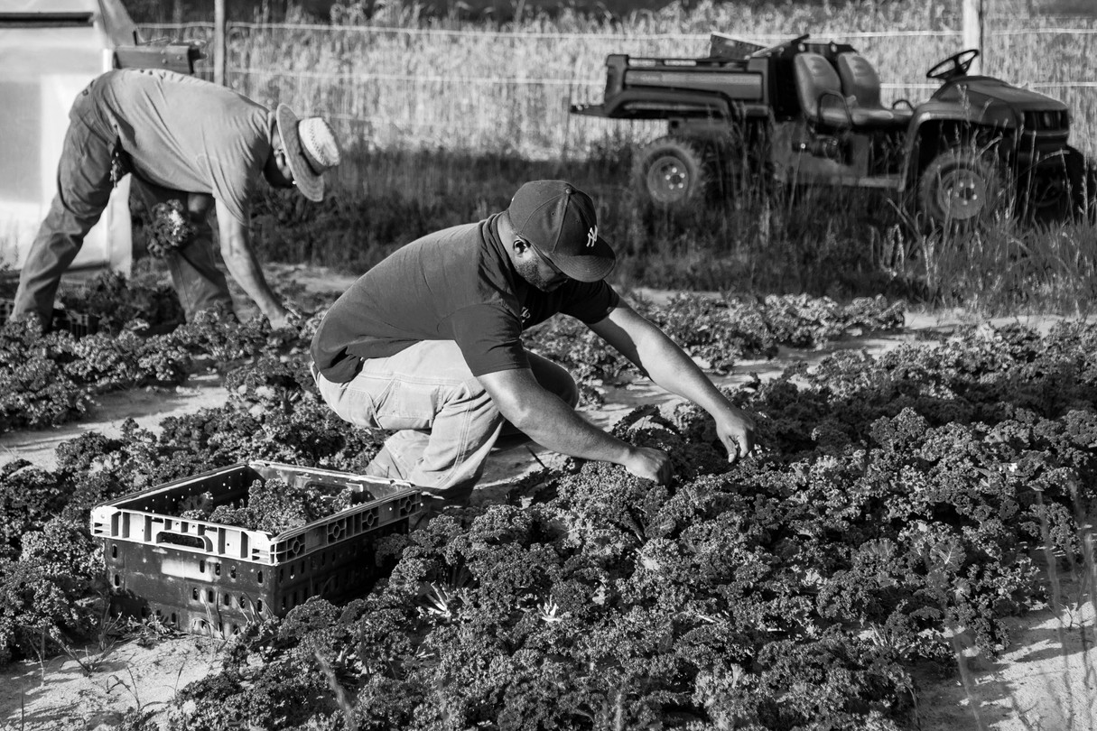 Father and Son Harvesting as a Team