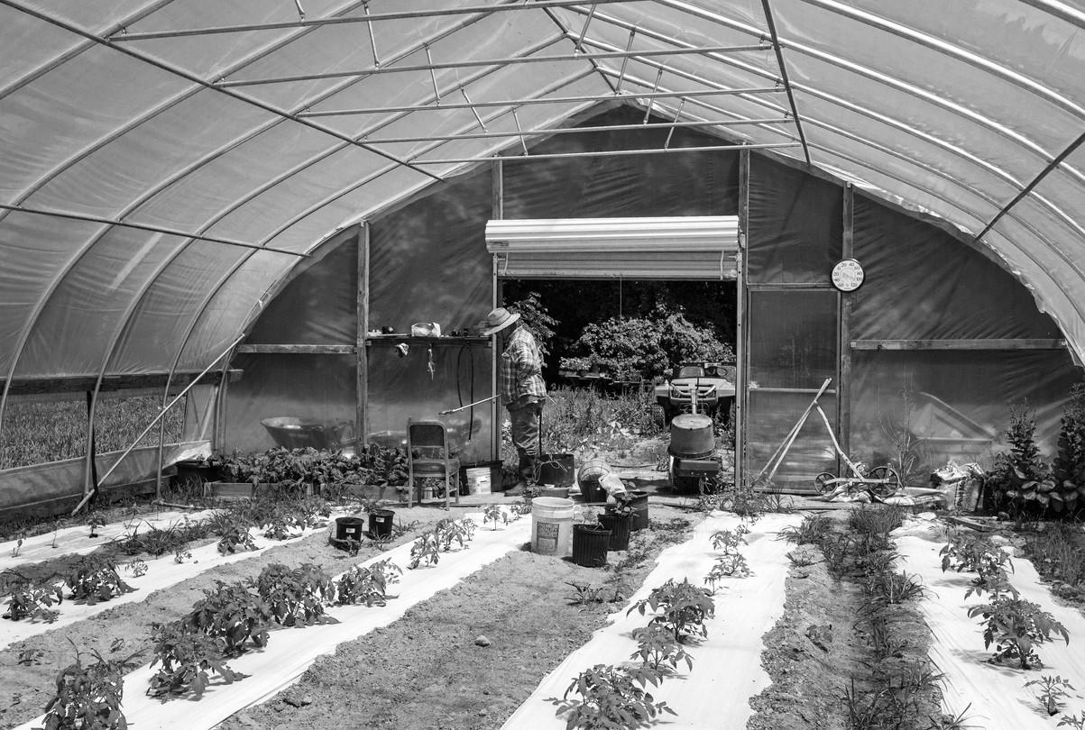 Healthy Tomatoes Demand Water