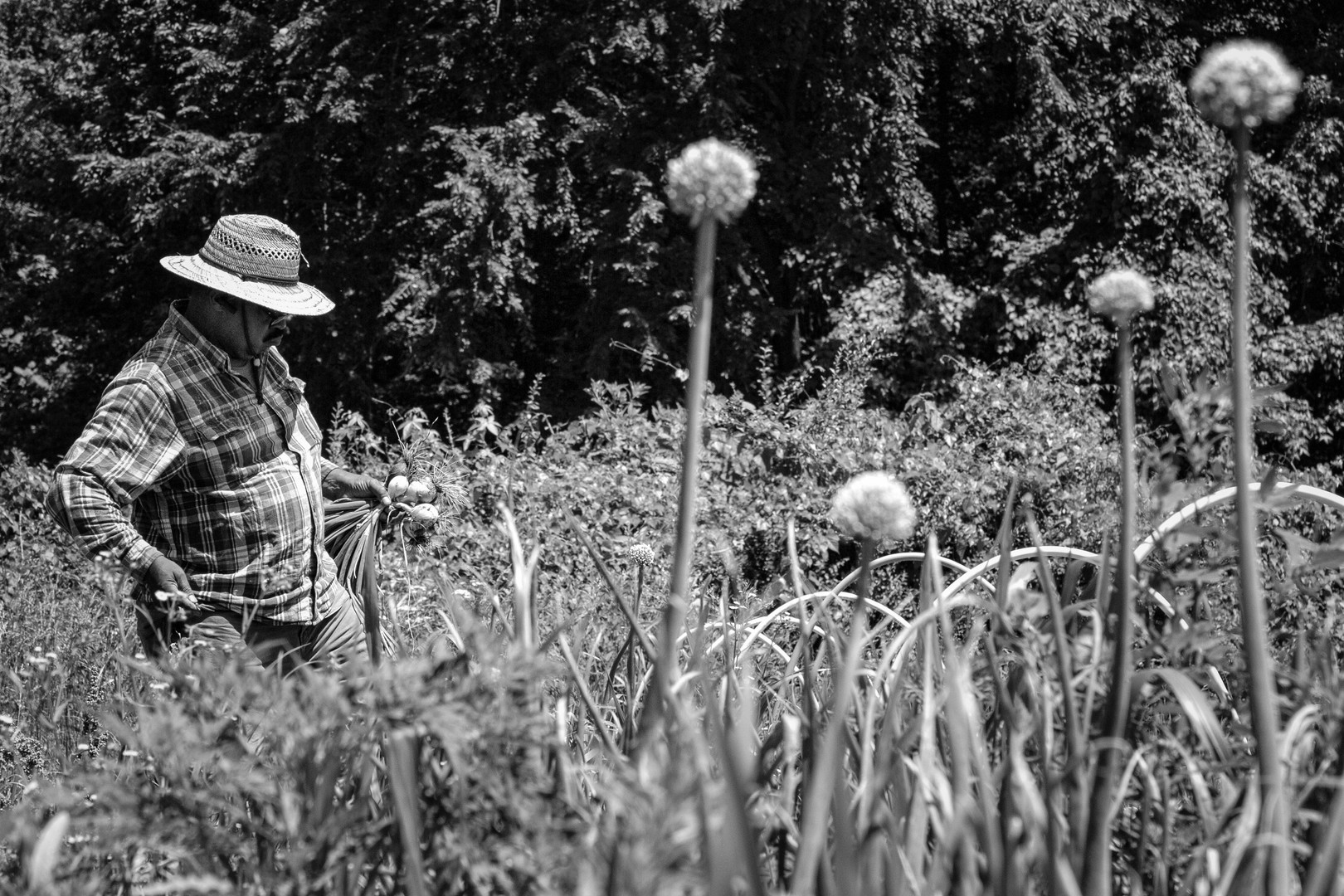 Herb Sr., in the Onion Field