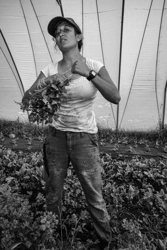 Damaris Picks Herbs