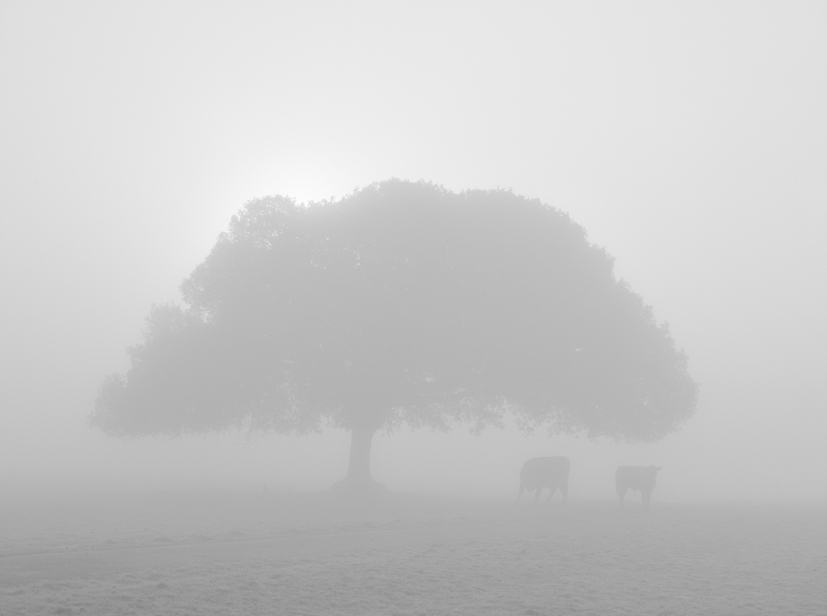 Cows in the Mist 3517