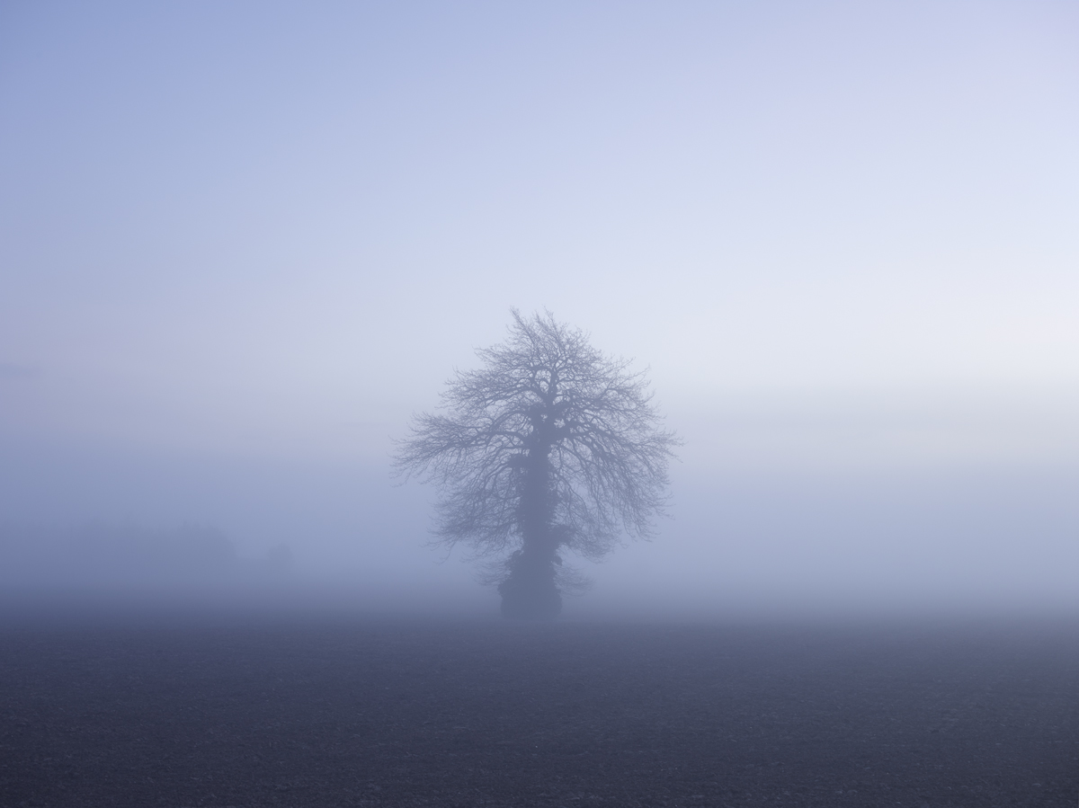 Tree 3658