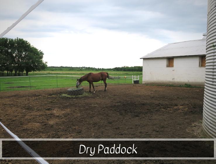 Dry Paddock.png
