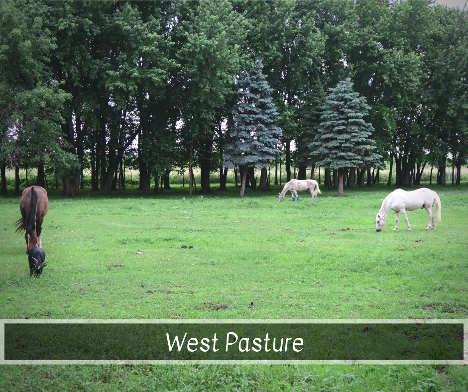 West Pasture.png