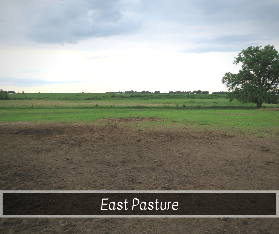 East Pasture.png