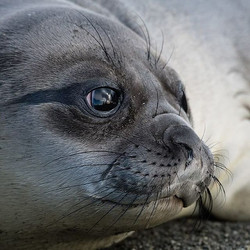 Just love these seals