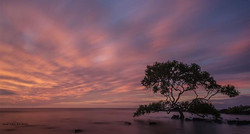 Vernaka Tree Wide Bay #awesomeearth #ahd_photo #Colors_of_day #discoverearth #earthpix #Click_Vision
