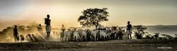 Modern Herding
