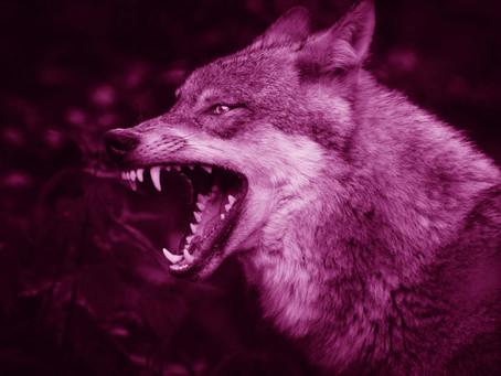 Rogue Wolf Mindset