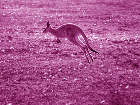 Hopping with the Kangaroos