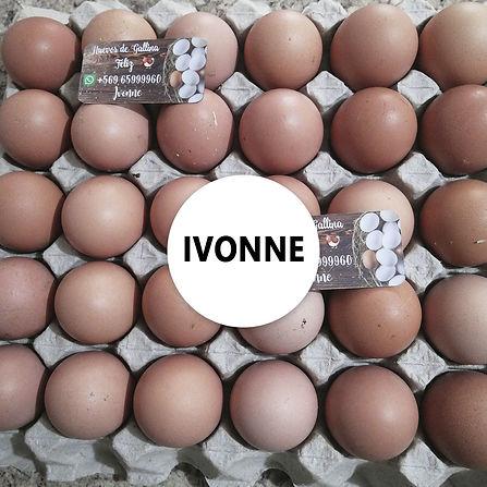 Ivonne.jpg