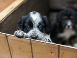 Breeders Vs Rescues, Is One Better Than the Other?