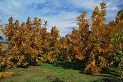 El otoño llegó
