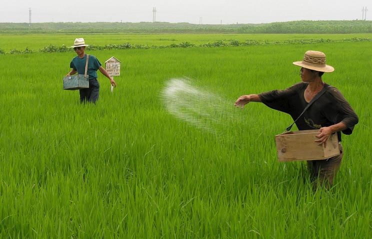 """Южная Корея готовит """"антистрессовые"""" препараты для адаптации растений к изменениям климата"""