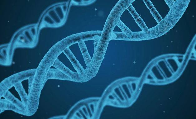 Ученый отредактировал ДНК близнецов для противостояния заражению ВИЧ