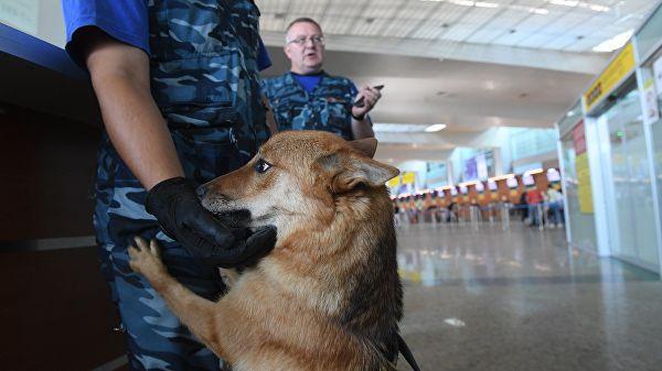 """""""Аэрофлот"""" зарегистрировал породу своих служебных собак в системе РКФ"""