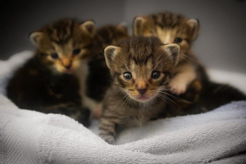 Алтайские ученые представили методику для определения темперамента кошек