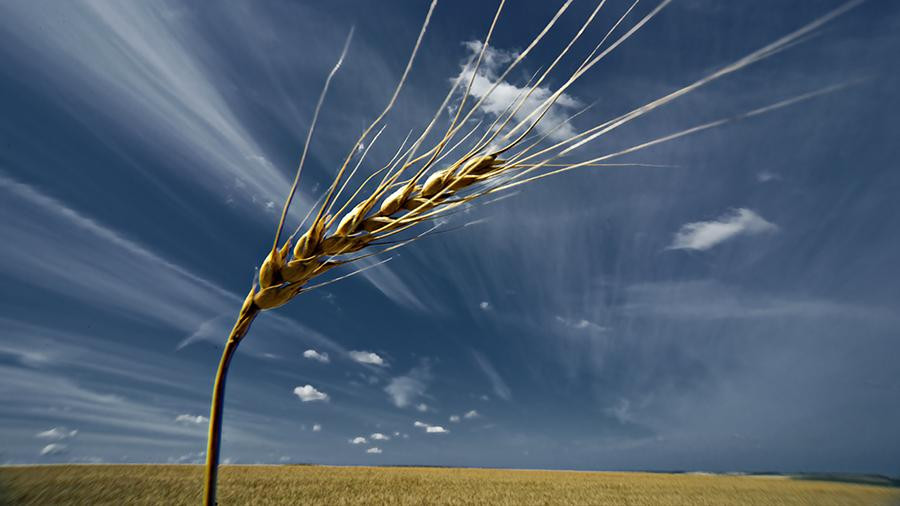 Что просветишь, то пожнешь: ученые спасут урожай с помощью рентгена