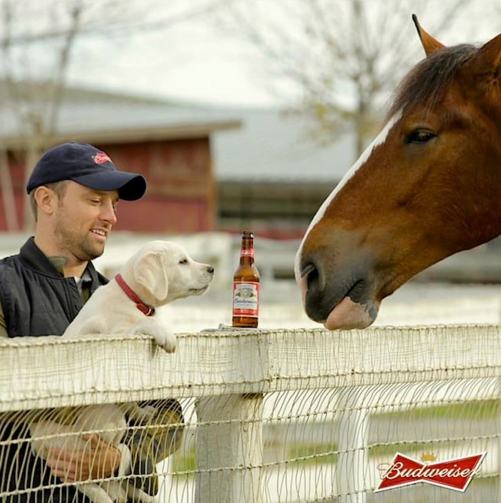 Budweiser's Clydesdale Ad