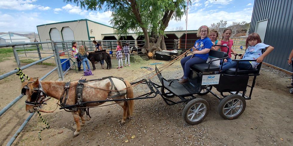 Pony camp ages 4 to 10 and under 65 pounds
