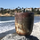 Thumbnail: Cups of Arya
