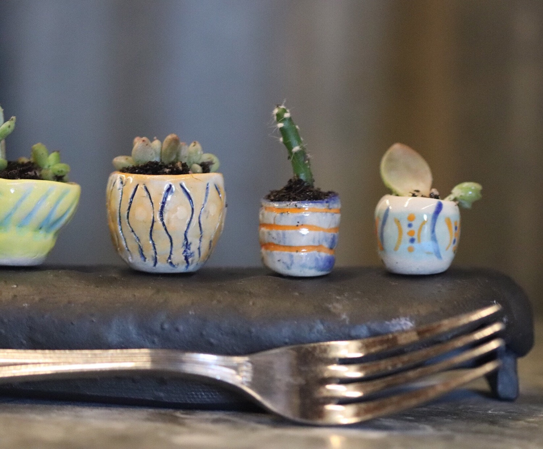 Tiny Succulent Garden Party