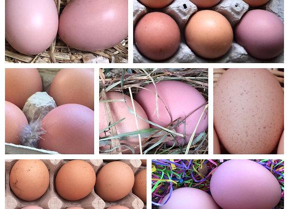 6 Croad Langshan Eggs (1/2 Dozen)