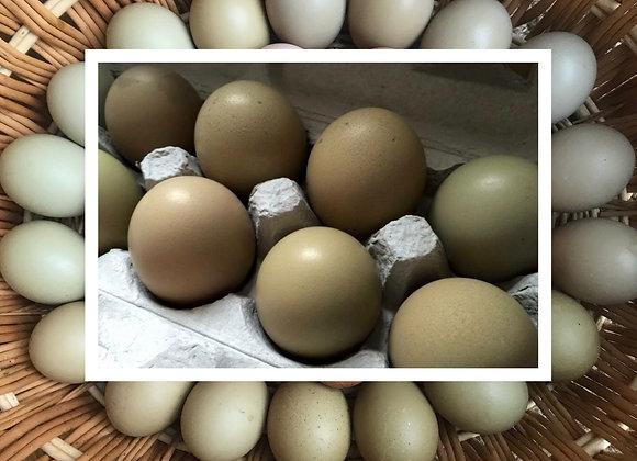 Olive Egger Eggs (1 Dozen)