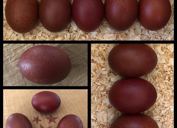 6 French Black Copper Marans-A Line Eggs (1/2 Dozen)