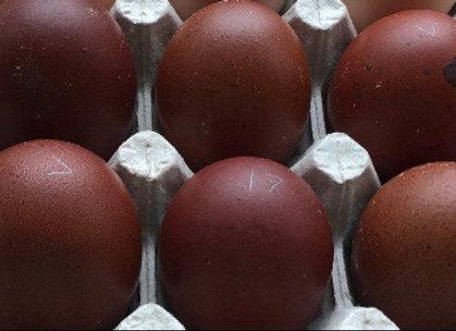 Black Copper Marans A Line-Eggs (1 Dozen)