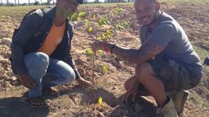 June - Tree Planting at Thai Shyo School
