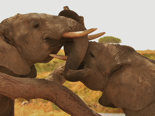 Elephants .... By The Numbers