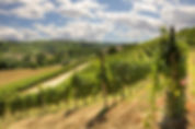 piedmont-langhe-hills-vineyards.jpg