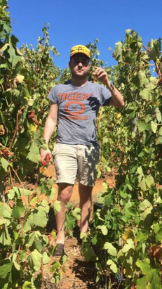 Adam repping The 'Burgh while harvesting grapes in South Africa