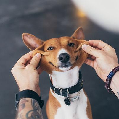 happy dog, smiling dog, pet dog, dog treas