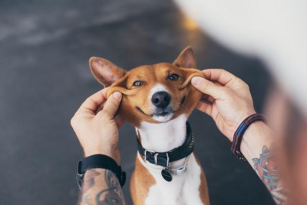 Verwachtingen hond