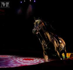 ростовский гос цирк