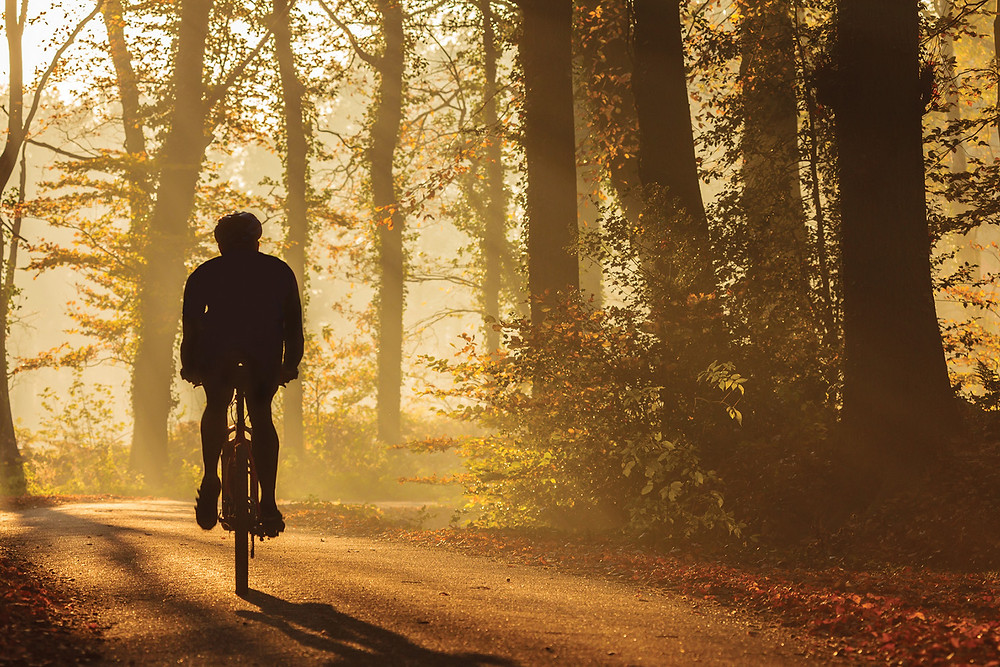a cyclist's silhouette rides up a forest path at sunrise