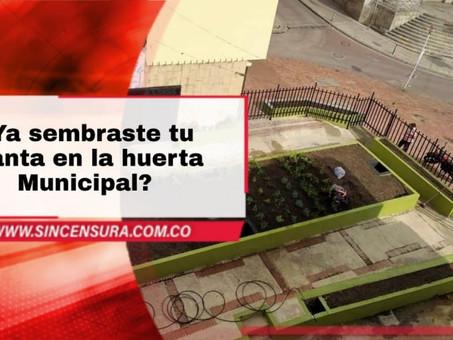 ¿Ya sembraste tu planta en la Huerta Municipal?