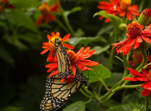 First Photos: Butterfly World