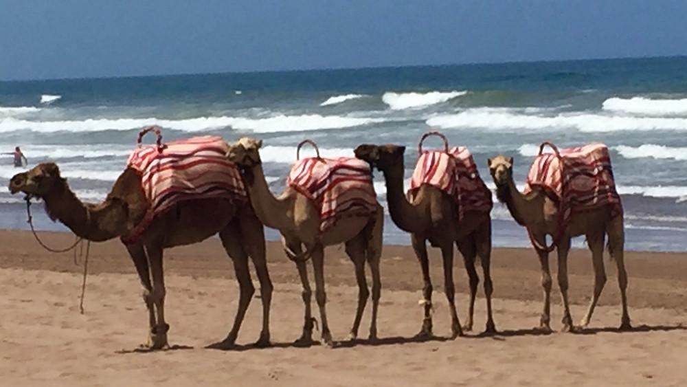 Mazagan Beach, Morocco