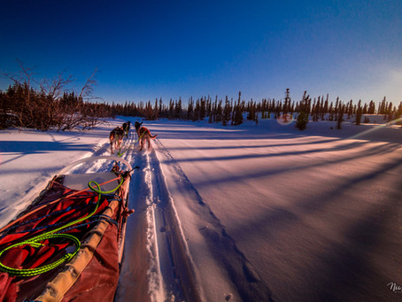 Dogsledding in Alaska - How I became a musher in 3 cold days
