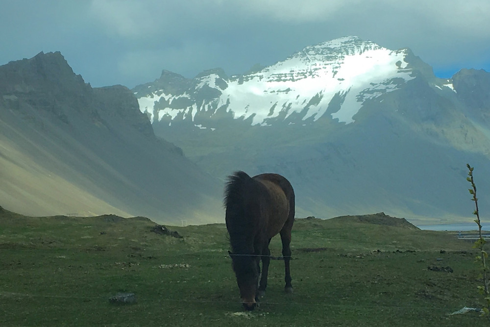 Dynjandi Horse Farm, Hofn, Iceland   photo credit: Jen Stover