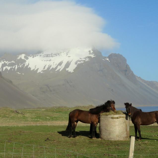 Dynjandi B&B - Iceland