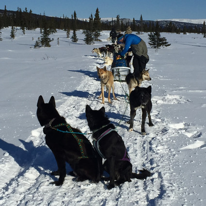 Dogsledding in Alaska