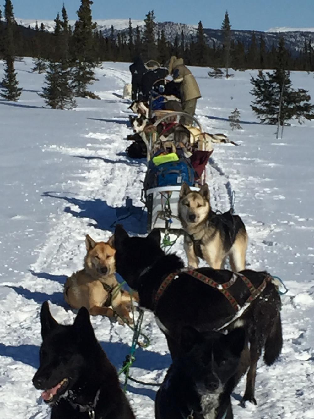 Alaska dogsledding - www.paradoxtravels.com