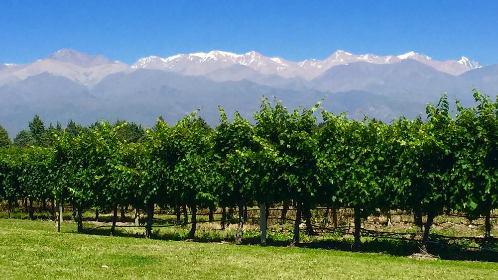 Lujan du Cujo region, Mendoza Argentina