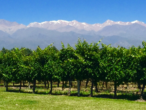 4 Reasons to Hire a Guide in Mendoza
