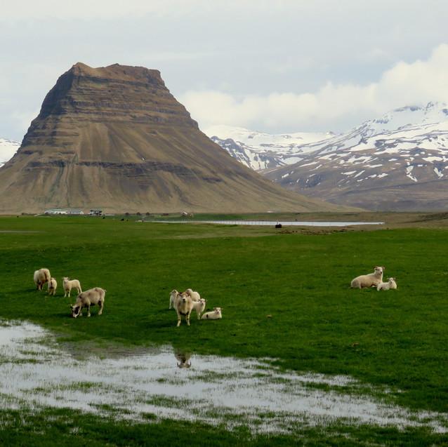 Berg Horse Farm, Iceland
