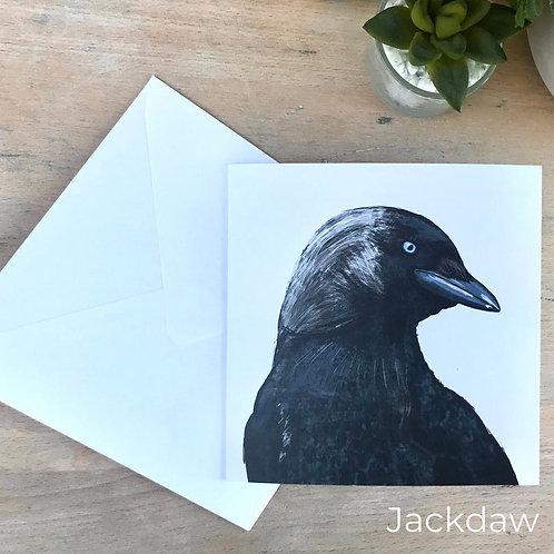 Jackdaw Card